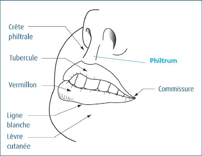 anatomie des muscles des l vres et des joues conseil dentaire dr hauteville. Black Bedroom Furniture Sets. Home Design Ideas