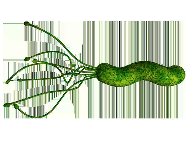 HelicobacterPylori (helico.com)