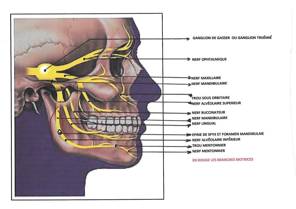 reeducation articulation temporo mandibulaire pdf