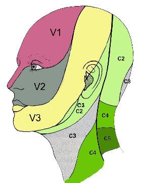 Innervation sensitive de la face et du cou (gremmo.fr).