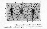 Dictionnaire des sciences.